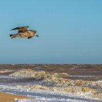 Чайки жирные летают просто жуть... :: Юлия Бабитко