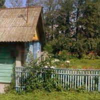 Деревенская жизнь :: Ирина Олехнович
