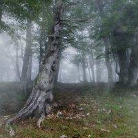 таинственные лесные духи :: Elena Wymann