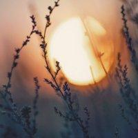 На закате... :: Мария Буданова