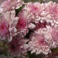 Нежные хризантемы :: Нина Корешкова