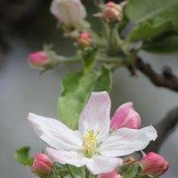 Цветочный хоровод-424. :: Руслан Грицунь