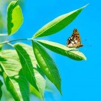 Бабочка :: Иван Сагиров