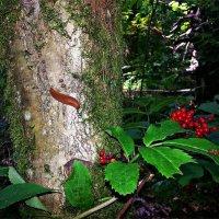 В лесу... :: Валерия Комова