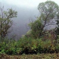 И время тающим туманом... :: Лесо-Вед (Баранов)