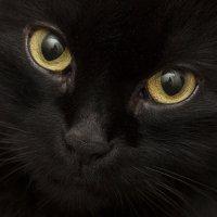 Черная кошка :: Alena Sturova