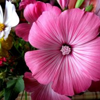 Розовая пыльца :: Милла Корн