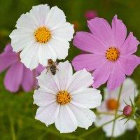 цветочки :: Седа Ковтун