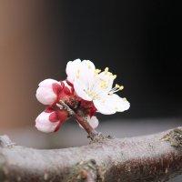 Цветочный хоровод-427. :: Руслан Грицунь