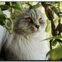 Кэтти- любительница флоры.. :: Любовь Чунарёва
