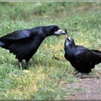 дай-дай! :: linnud