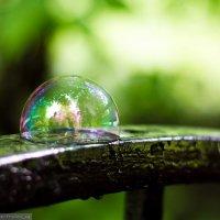 Мыльный пузырь :: Виктор Фролов