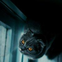 моя кошка нюша :: Александр Кравченко