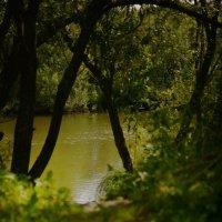 Река :: grovs