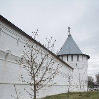 У стен монастыря в Серпухове :: Irina Shtukmaster