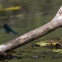 Мир насекомых :: Татьяна Нижаде