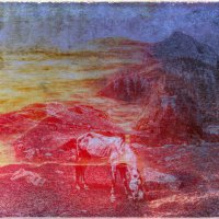красный конь или белая лошадь :: Алексей Карташев
