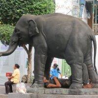 Не только кошки под слонами отдыхают... :: Наталья Нарсеева