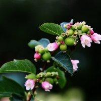 Необычное цветение :: Damir Si