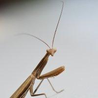 насекомое :: Сергей