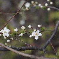 Цветочный хоровод-435. :: Руслан Грицунь