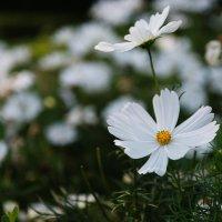 В моём саду. :: Фомин Виталий