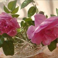 Весной согретые чайные розы :: Нина Корешкова