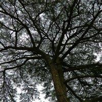 деревья Версальского парка :: Александр Корчемный