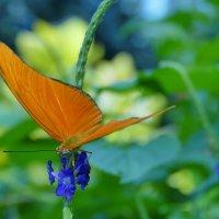 Оранжевое чудо... :: Юрий Поляков