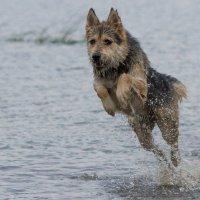 Собака :: Виктор Фролов