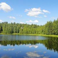 Лесное озеро :: Елена Павлова (Смолова)