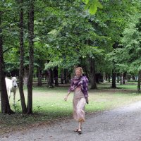Про белую лошадь. :: Larisa Gavlovskaya