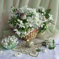 Яблони цвет :: Светлана Жив-ая