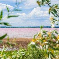 Малиновое озеро :: Андрей Павлов