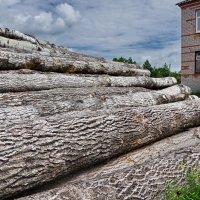 Дрова для школы :: Валерий Талашов