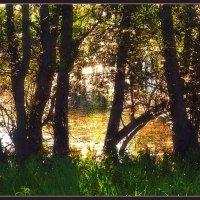 За деревьями :: Анатолий Фирстов