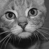 Кошка :: Марина