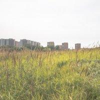 На окраине города :: Олег Гаврилов