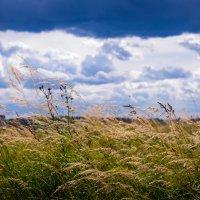 Август пахнет скошенной травой... :: Людмила Сафина
