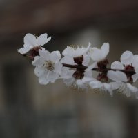 Цветочный хоровод-441 :: Руслан Грицунь