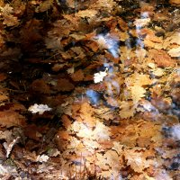 Осень. :: Андрей Гирман