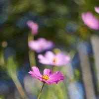 и снова цветочки :: Седа Ковтун