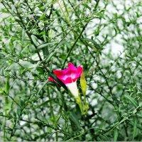 Так вот ты какой, цветочек аленький?! :: Валентина ツ ღ✿ღ