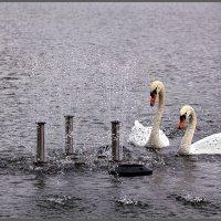 Это что ещё за железные лебеди в нашем пруду?!!! :: Irina-77 Владимировна