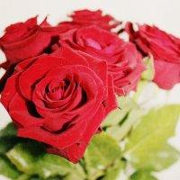 Розы :: Ксения Петрова
