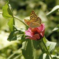 Бабочка на цветке :: esadesign Егерев