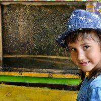 Теперь мы знаем, как живут пчелы! :: cfysx