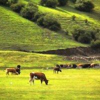 Далеко, далеко  на лугу пасутся ко… - Правильно, коровы! :: Галина