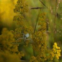 Белый паук :: Ирина Марасакина