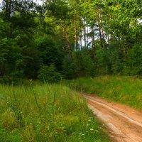 Дорожка в лесу :: Игорь Вишняков